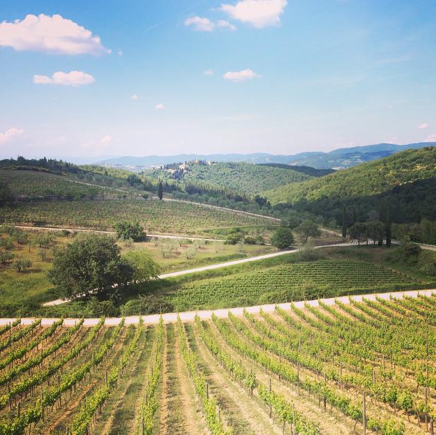 Un vignoble de Chianti